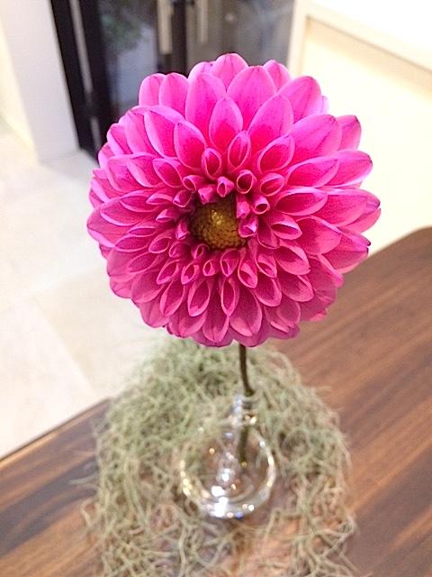 ☆atelier LIZERO(アトリエリゼロ) Flower Interior☆