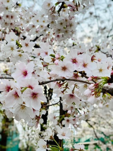 ☆atelier LIZERO(アトリエリゼロ) Flower Interior&桜☆